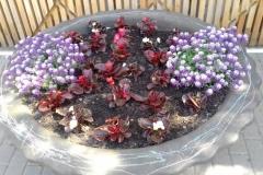 небольшой вазон с цветами-ковриками