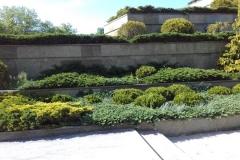 многоуровневое озеленение хвойниками