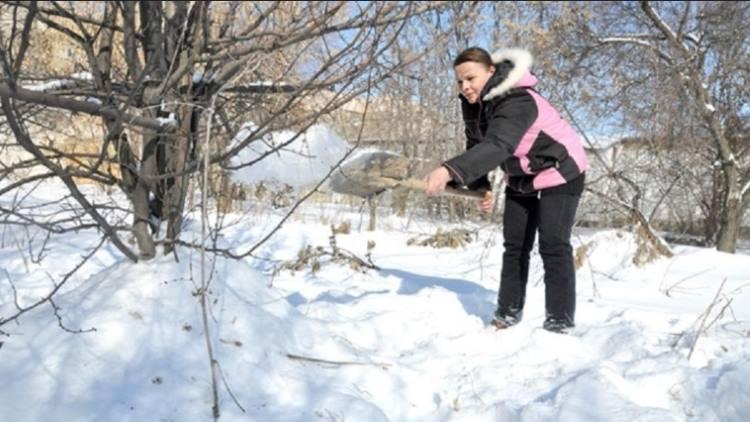 увеличение количества снега возле яблони