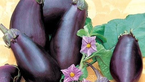 Плоды баклажана Робин Гуд и его цветки