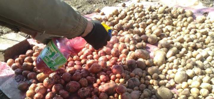 обработка картофеля перед хранением