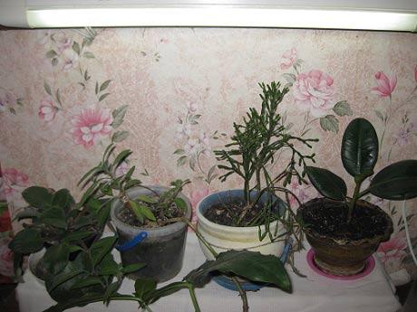 досвечивание растений