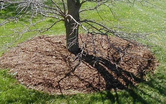 дерево утеплено опилками