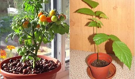 выращиваем дома