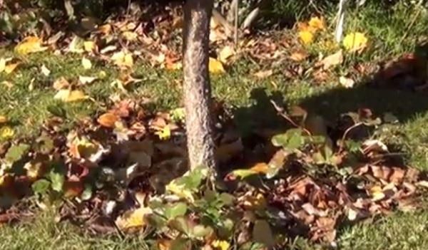фото опавших листьев