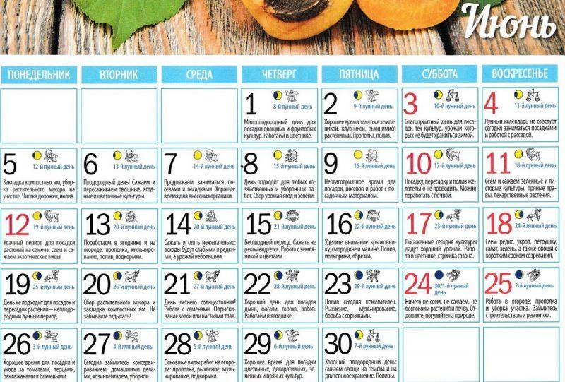 лунный календарь садовода и огородника - июнь 2017