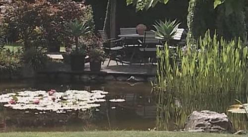 фото пруда в саду