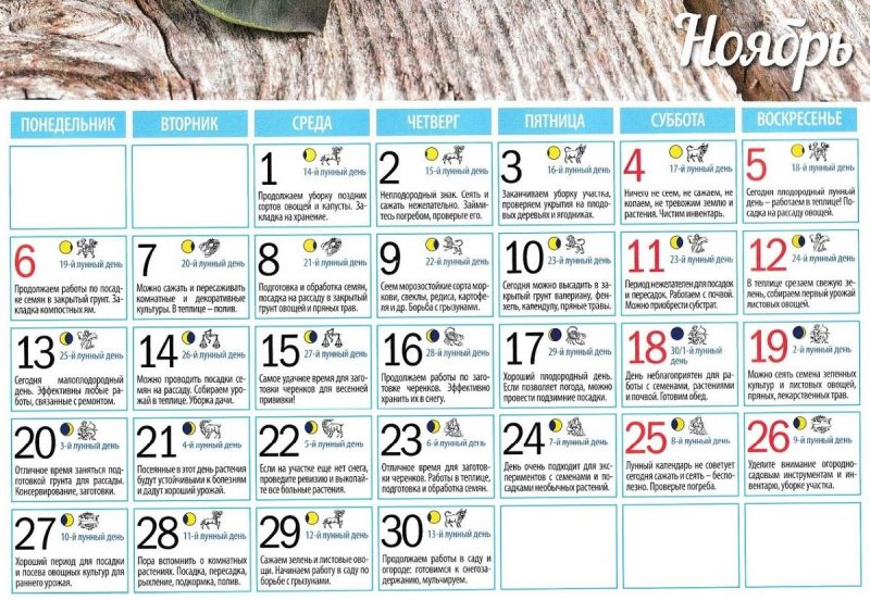 лунный календарь на ноябрь 2017 года для садоводов