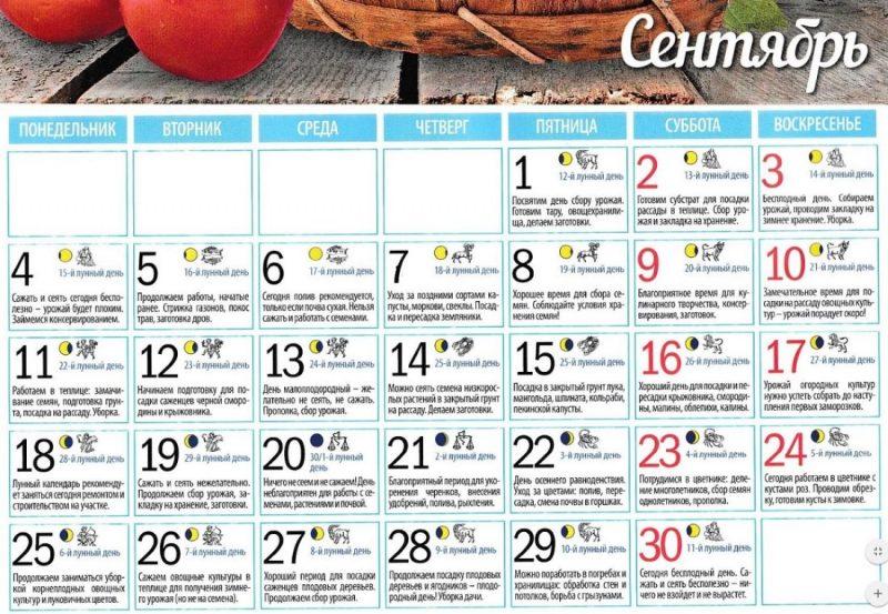 Лунный календарь садовода и огородника на сентябрь 2017