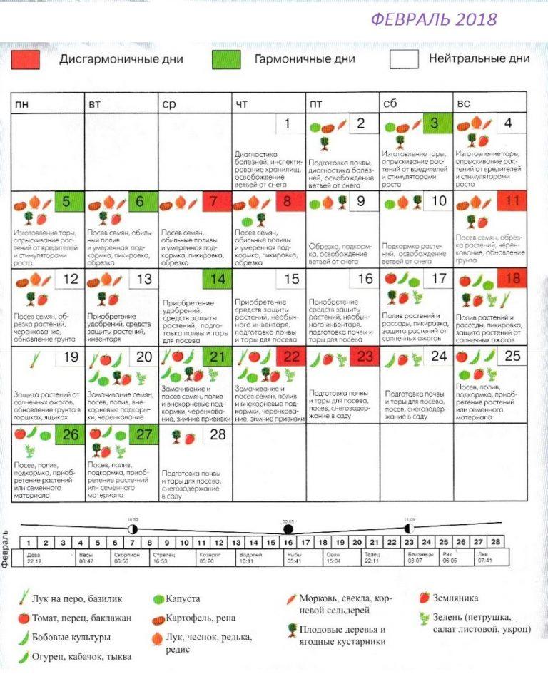 Календарь посадки чеснока: благоприятные дни, лунный календарь 4