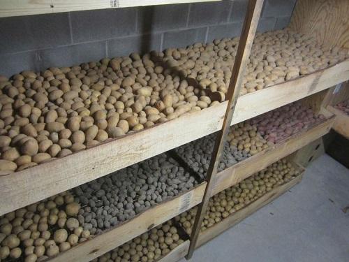 картофель - хранение в ящиках