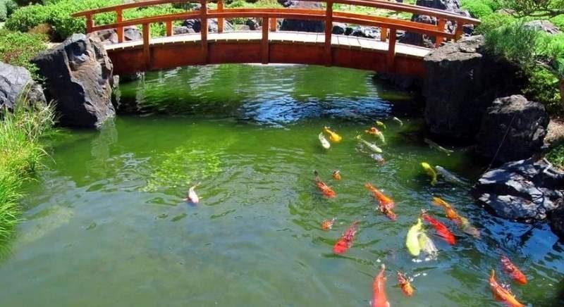 Красивый пруд для рыбы с мостиком
