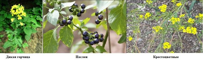 растения на почве с избытком калия