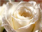 осенняя обрезка роз