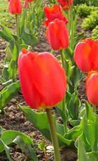 цветы для Севера