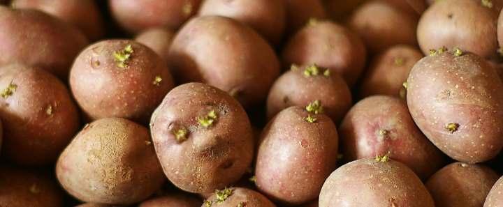 картофель весом примерно 80-90 грамм