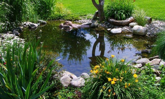 Красивый пруд с растениями