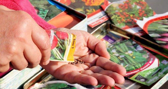 Проверка семян в пакетике