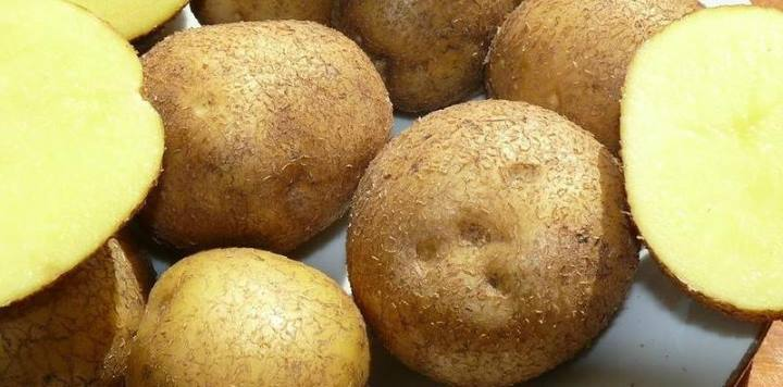 сорт картофеля Венетта