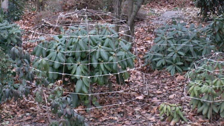 Устройство каркаса для укрытия рододендрона